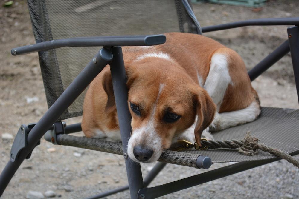 訝しげに見つめる犬。